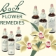 Terapia floral en Toledo. Flores de Bach