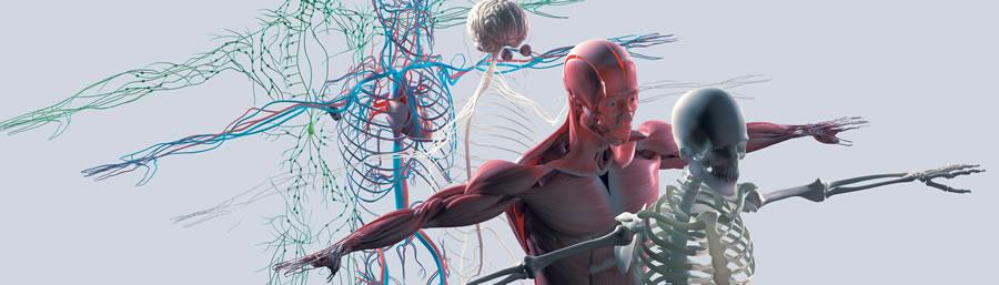 Neuromecánica y Deporte